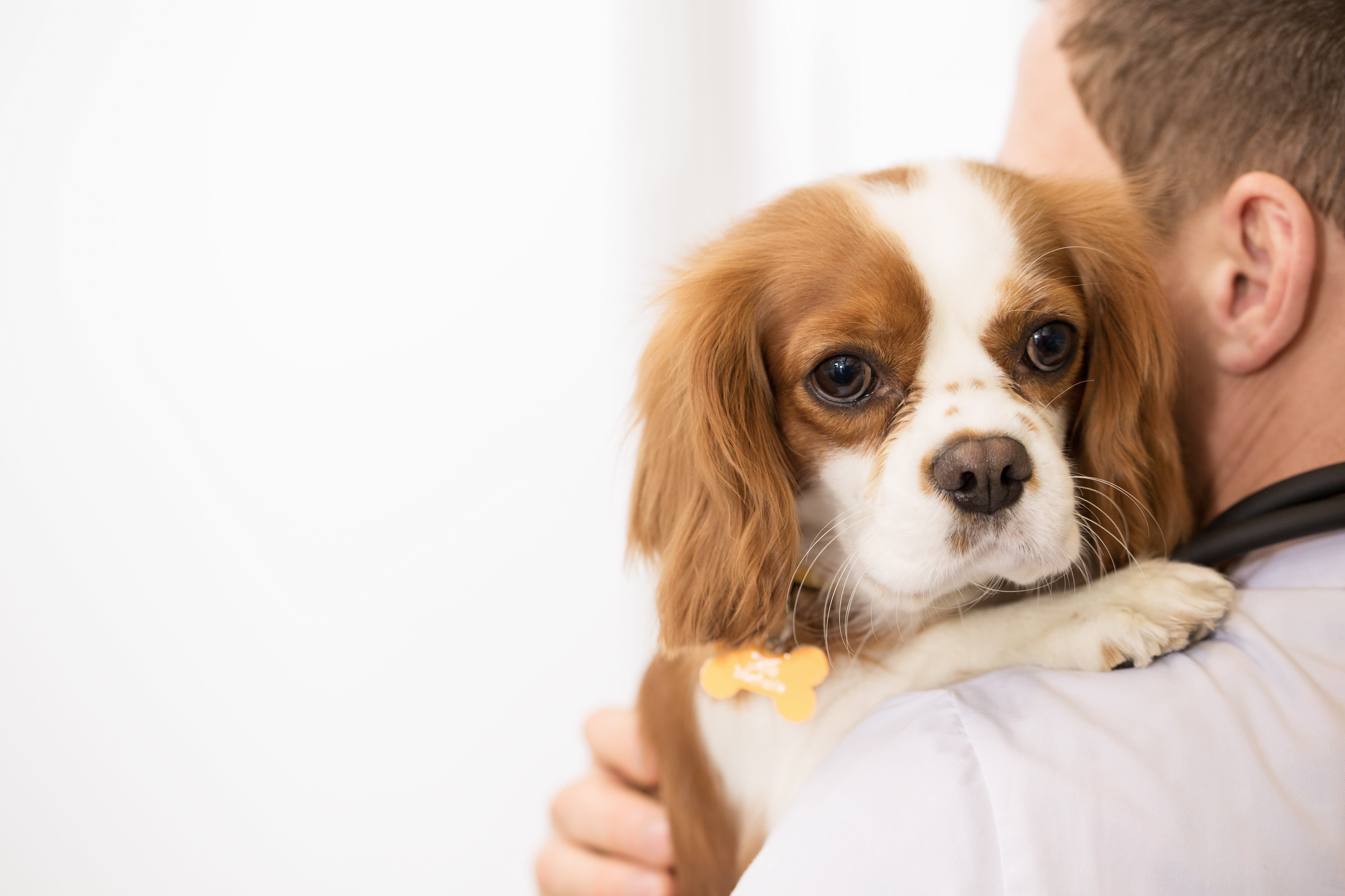 Signs Your Pet Needs Emergency Vet Care | Bartlett vet | Hillcrest Animal Hospital