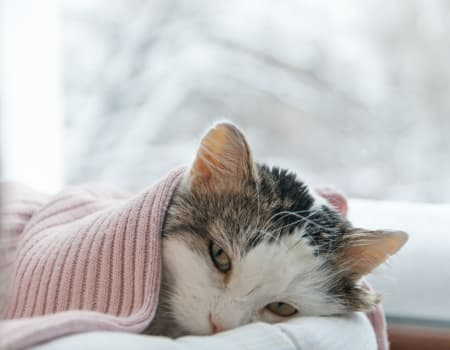 Cat Colds Can Cats Catch Colds What You Can Do Hillcrest Animal Hospital Bartlett Vets